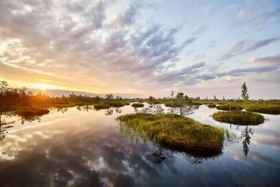 Рассвет над болотом Ельня природа рассвет утро лето небо