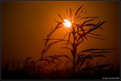 Тёплый вечер Приморье Закат Вечер