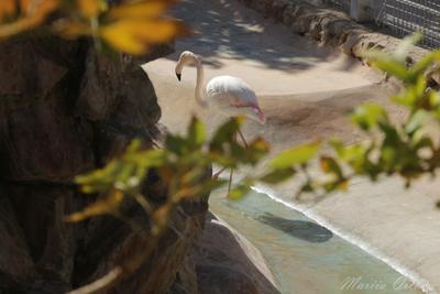 Фламинго фламинго природа зоопарк