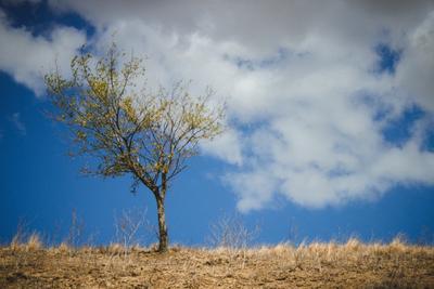 ***Дерево в пустыне