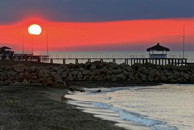 Рассвет с собачкой Рассвет собачкa море