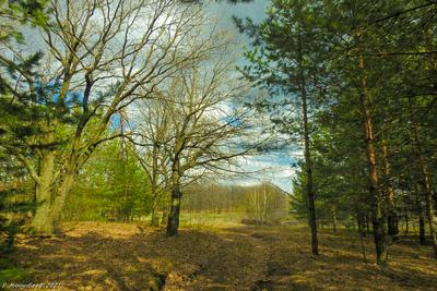 Зеленеет... пейзаж природа весна лес