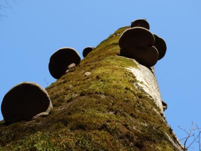 вверх горы река грибы лес небо