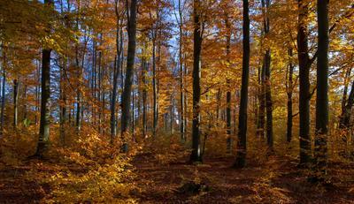 В ноябре осень лес
