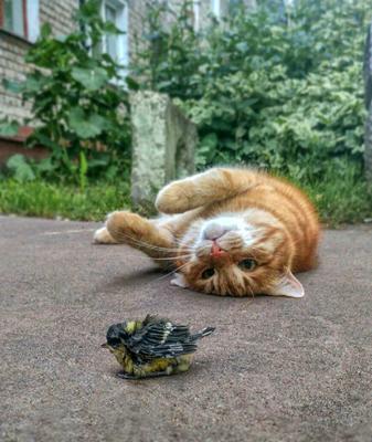 Поиграем в кошки-мышки.