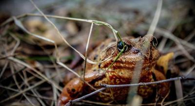 masking лес лягушка лягушки маскировка осень трава