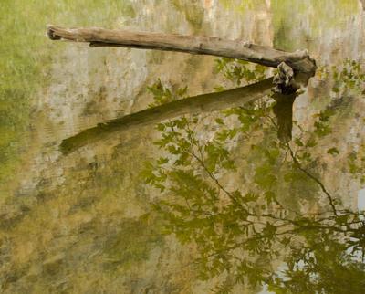 Осень, отраженная в пруду.