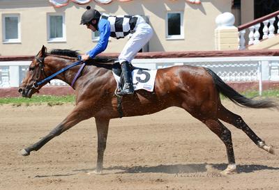 DollarKing скачки лошадь ипподром цми скаковые
