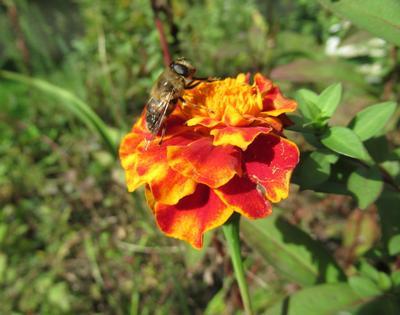 Сентябрь! природа осень флора фауна цветы макро насекомые