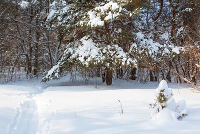 Зимняя тропинка сосны зимний пейзаж снег