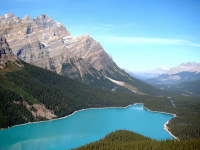 Peyto Lake - голова волка Канада Альберта Банф Banf Peyto Lake озеро Скалистые горы лес природа пейзаж