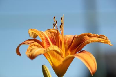 *** Цветок лето макро любовь
