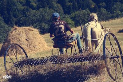 Beckham 23. сенокос, бекхем, лошадь, сено, горы, грузия, август
