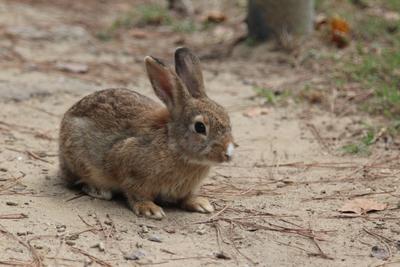Кролик кролик зоопарк дикий грызуны