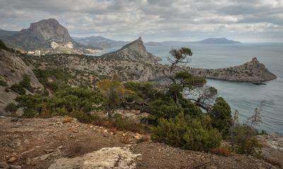 Новый Свет 1 Новый Свет Крым можжевельник октябрь море мыс Капчик скала остров Черепаха
