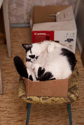 Размер имеет значение кот Тёма табуретка коробки одна и другая