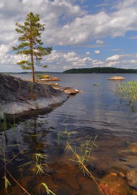 Сосна. Озеро Сайма валуны сосна тростники озеро Сайма Озерный_край summer Saimaa Lake_District