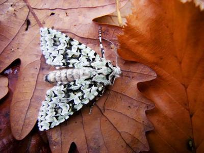 Мотылек мотылек осень поздняя