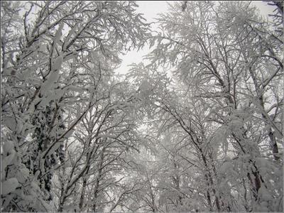 Лесные узоры Карелия лес деревья снег ветки