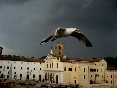 Чайка чайка, Рим, остров Тиберина, гроза, небо