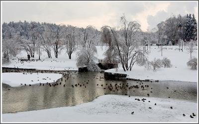 Крещенские морозы. зима мороз пруд утки