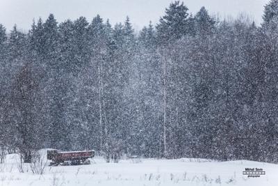 снегопад снегопад лес