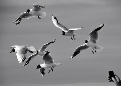 Остановись, мгновение. чайки