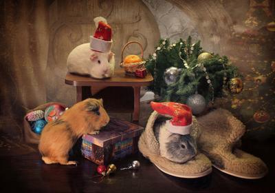 В гостях у Деда Мороза животные питомцы морские свинки композиция новый год елка украшения