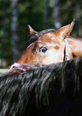 - Это не я сделал! лошадь