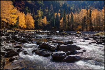 Перекат на реке Кумир Алтай Кумир Осень Вода Камни Горы Река Перекат