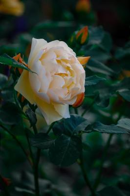 Легкость. цветы