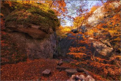 *** Крым Демирджи Осень буковый лес