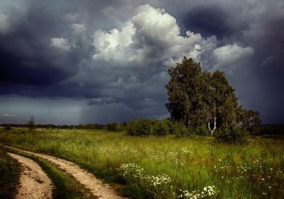 Перед грозой лето полевая дорога надвигается гроза тучи березы