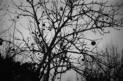 под Новый Год Валгунде монастырь зима дерево