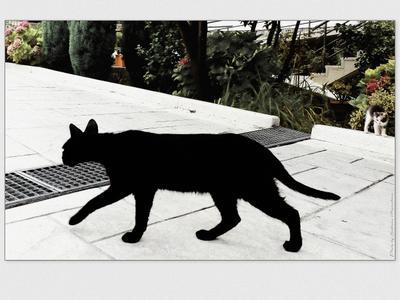 *Клякса: чёрным по светлому* Фото.Сайт остальное