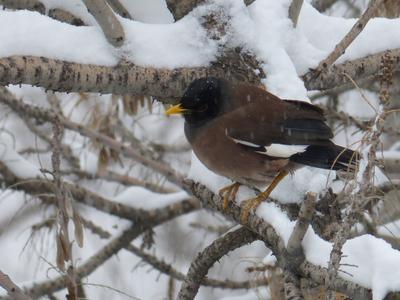 Холодно птичке зима снег птица майна дерево ветки