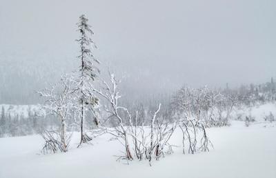 Неброская красота Севера Швеция Север