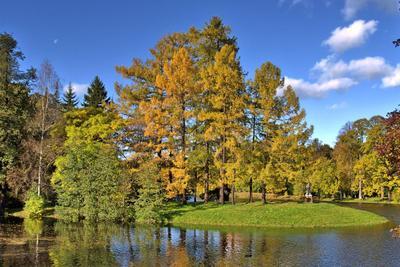ЦПКиО. Краски осени пейзаж, пруд, осень, листва, золотой