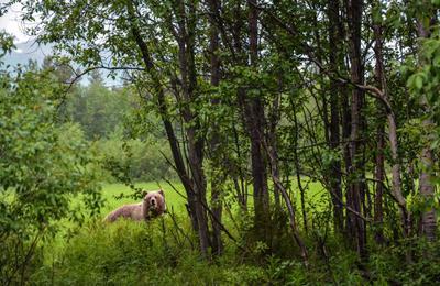 Михаил Потапыч Медведь миша хозяин леса