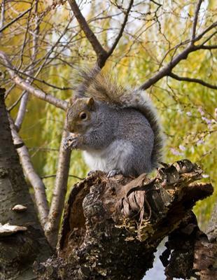 Раннезимний бостонский белк. usa, nature, squirrels, boston, animals, белка, парк, животные