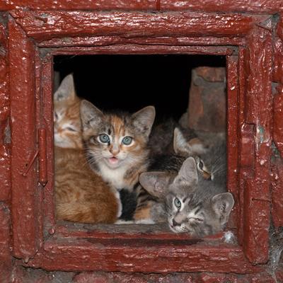 4 в квадрате котята, подвал, котэ, жалость
