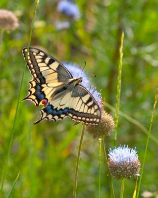 *** Л бабочка поздравление