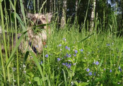 утренняя прогулка собака луг трава роса утро
