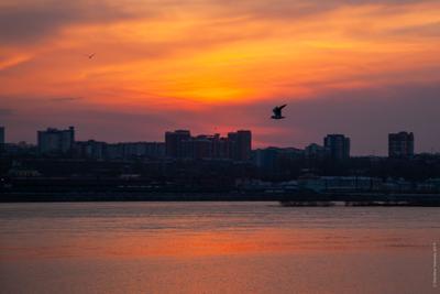 Закат, чайка, Ангара.