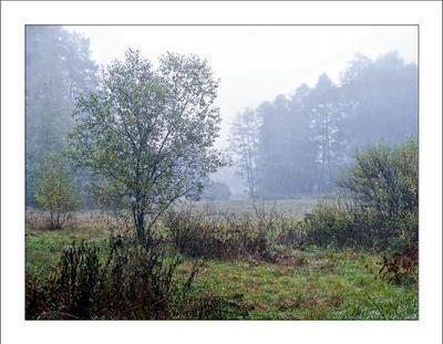 Одно осеннее утро осень, утро, туман