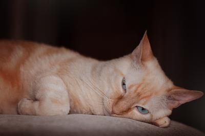 Жизнь кота - маята... кот рыжий дремлет
