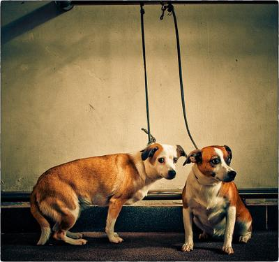 tow dogs собаки собака две