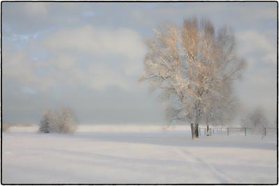 ***первые лучи 2 зима парки сестрорецка