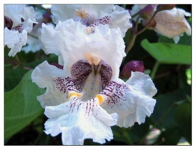 Удивительные цветы Азербайджан Закатала Цветы Аромат Природа Благоухание Радость Жизнь