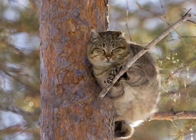"""Март! Коты """"прилетели"""". март кот на дереве"""